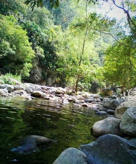 Zapotal SanPedroSula Cortes Catracha Hondurasturistica 504H