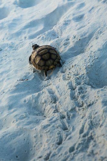 Rear view of tortoise walking in sand