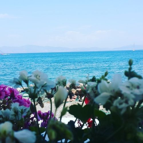 Sea Flower Nature Horizon Over Water Water Beauty In Nature Sky Beach Scenics No People Tranquility Outdoors Day Plant Blue Fragility Clear Sky Freshness Close-up Flower Head