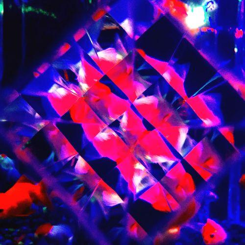 Osaka,Japan Japan Artaquarium Aquarium アートアクアリウム 金魚 きんぎょ