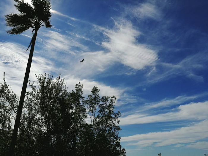 Yvytyrusu Bird Animal Wildlife Nature Cloud - Sky Paraguay ♥ Guaira P9 Huawei