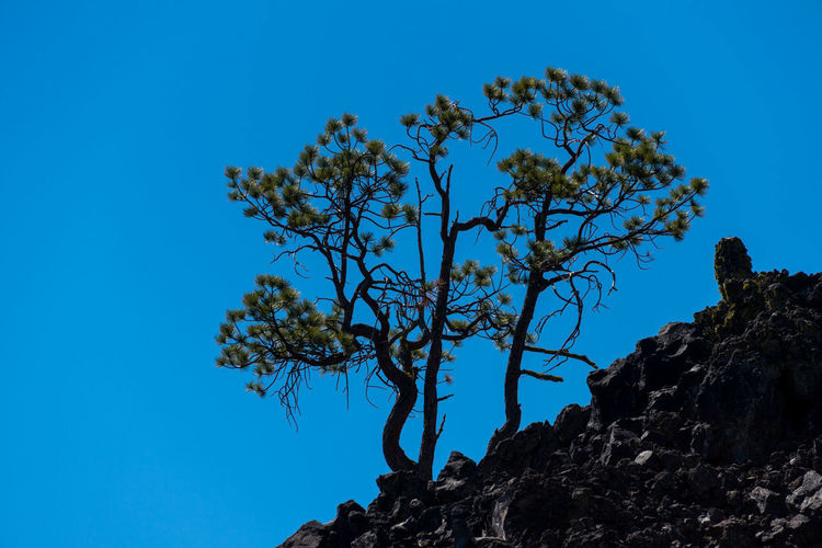 Trees growing out of volcanic rock Earth Beauty In Nature Blue Branch Clear Sky Day Geological Formation Geology Growth Lava Field Lava Rocks Low Angle View Nature New Growth No People Outdoors Plant Rock Rock - Object Scenics - Nature Sky Solid Sunlight Tranquil Scene Tranquility Tree Volcanic Landscape Volcanic Rock
