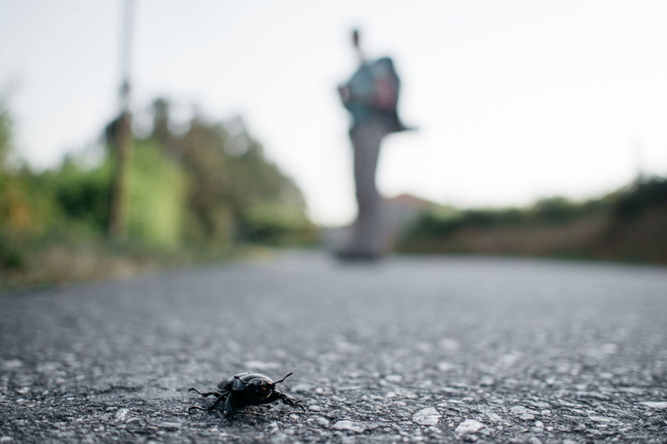 Bug on street with man standing in background