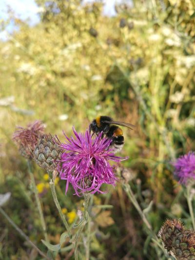 Bumble Bee 🐝