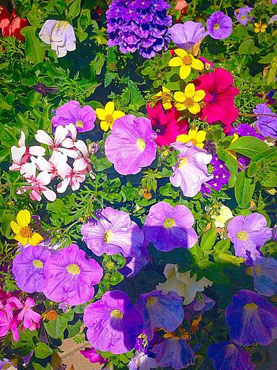 Purple Yellow Red Green Flowers Eye4photography  EyeEm Nature Lover Cute So Many Colors EyeEmBestPics