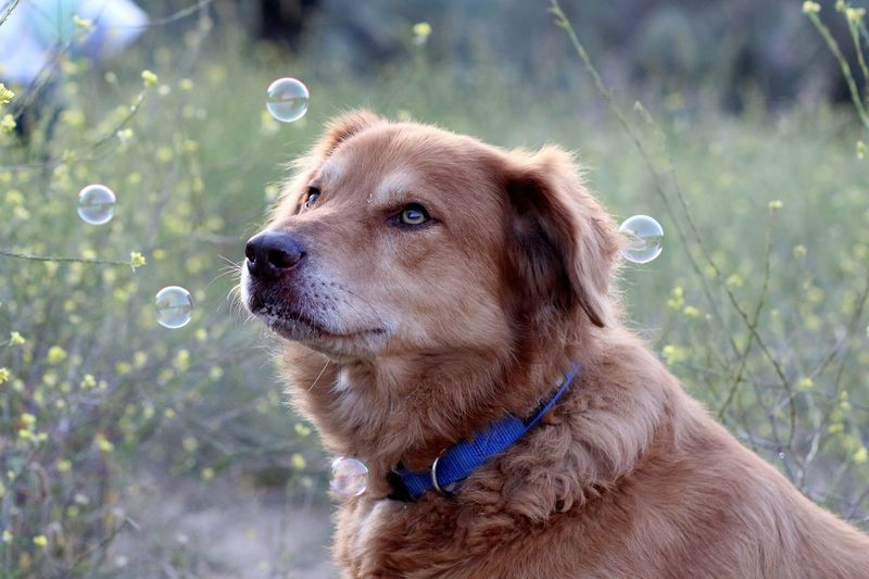 a cute dog with bubbles Dog Pets Yellow Cute Bubbles Nature Trip Dogs Photography Happy Animal Outdoors Plants Green Fun Fur Retriever Golden Retriever First Eyeem Photo Summer Road Tripping