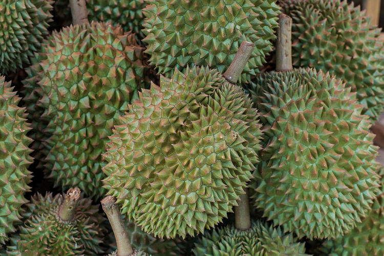 durian on flee market Growth Green Color Succulent Plant Plant Cactus Thorn No People Close-up Spiked Beauty In Nature Sharp Full Frame Day Nature Backgrounds Outdoors Barrel Cactus Focus On Foreground Natural Pattern Botany Needle - Plant Part Spiky Market Market Stall Marketing Marketplace Market Vendor Fleet Fleemarket Durian Durian Fruit Durian Season Thailand Mon Thong Durian Durio Zibethinus Durio DulcisDurio Grandiflorus Durio Graveolens Durio Kutejensis Durio Lowianus Durio Macrantha Durio Oxleyanus Durio Testudinarum