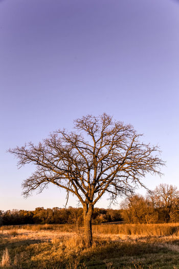 Field Illinois MidWest Nature Tree Country Life Countryside Open Sky Rurual Scene Sunset