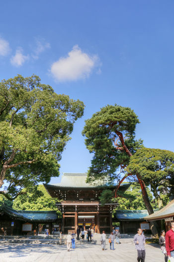 Architecture Day Japan Meiji Shrine Outdoors Peaceful Picturesque Tokyo Travel Destinations Tree