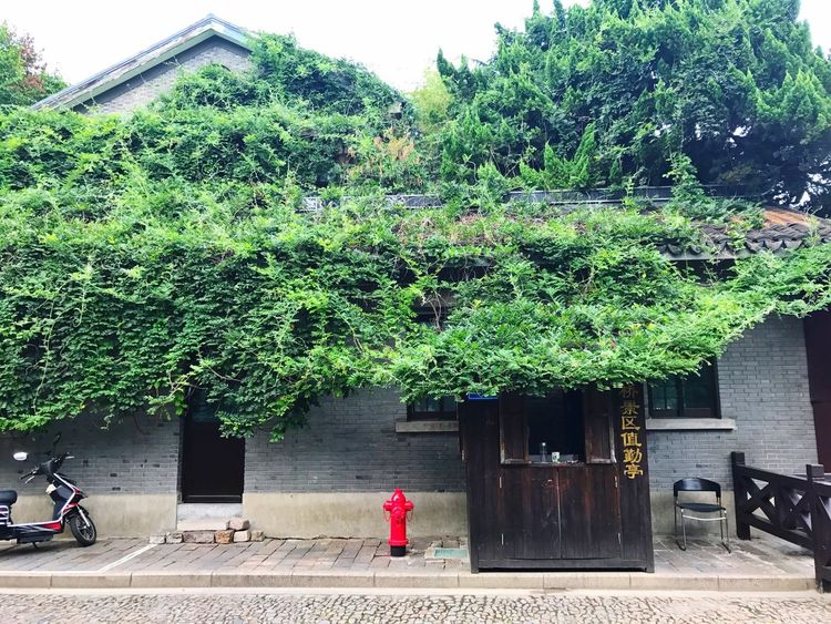 Tree Real People Rear View Built Structure Architecture Full Length One Person Day Growth Outdoors Building Exterior Walking Men Standing Plant Lifestyles Road Women Nature Sky