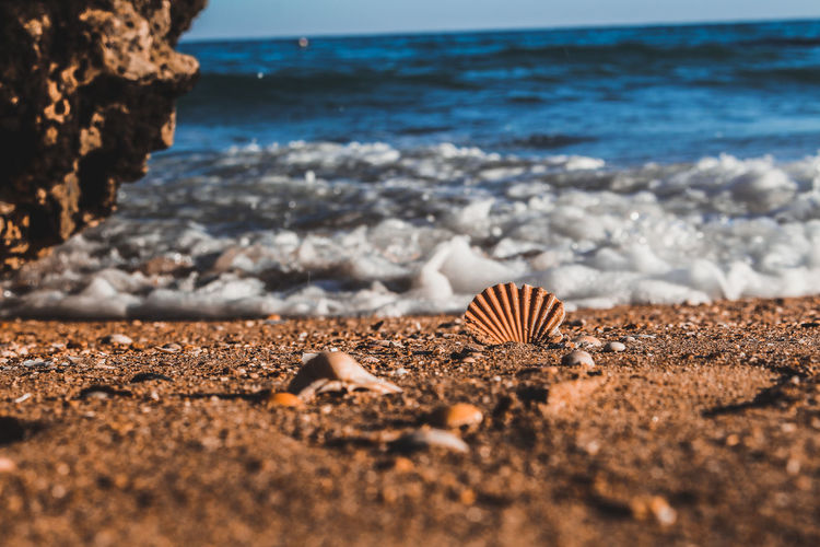 Surface level of pebble beach and a seashell