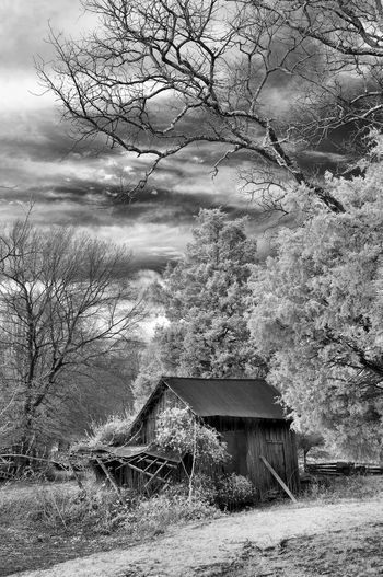 Bare tree in abandoned house against sky