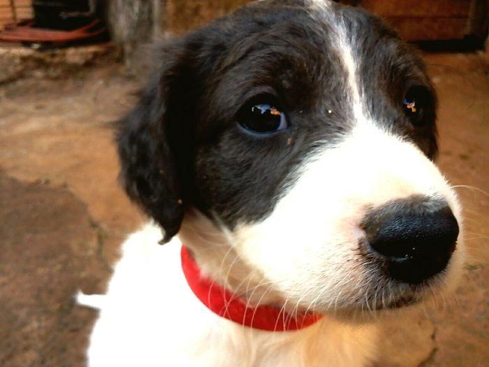Dog Littledog Cãozinho Cachorro Dogbeautiful Dog Love Domestic Animals Pets Dog Photography Shadow