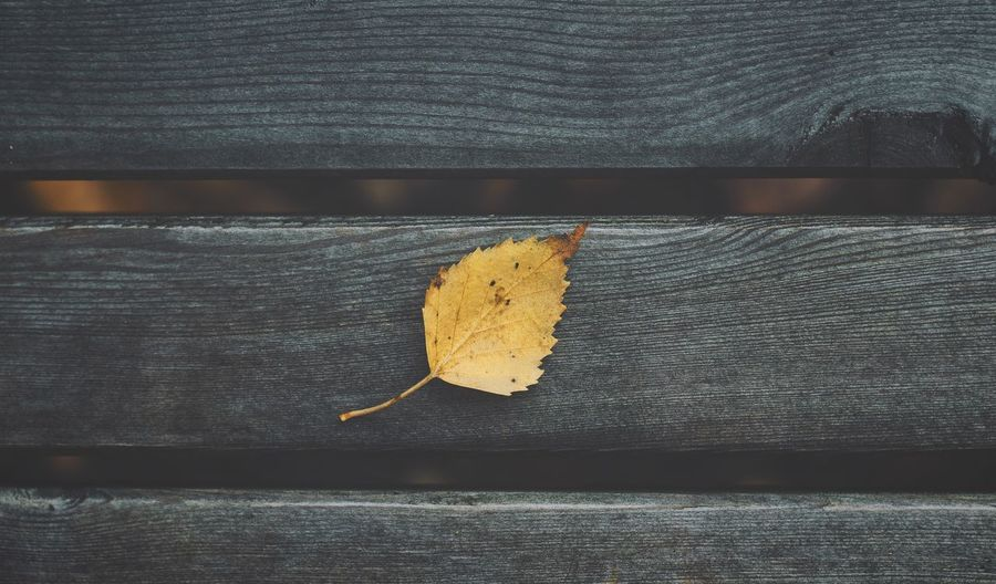 Yellow autumn leaf on a grey park bench Fall Fall Beauty Fall Colors Fall Leaves Autumn Autumn Colors Autumn Leaves Autumn Collection Autumn Colours Park Park Life Bench Leaf Autumn Close-up Yellow Grey Gray Wood Wooden Wooden Texture Nature No People Wood - Material Serenity