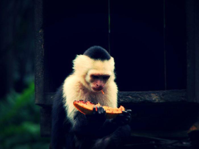 Monky Monkey Animals Naturaleza