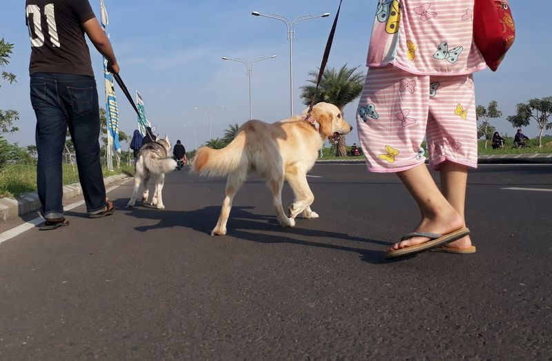 Low section of woman with dog on road in city