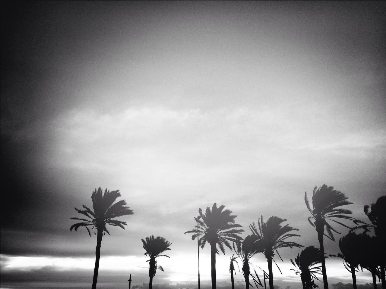Silhouettes Of Palm Trees During Windy Weather