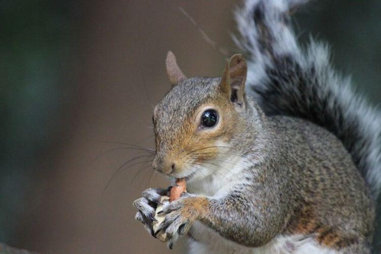Animal Animal Themes One Animal Mammal Rodent Animal Wildlife Close-up Squirrel