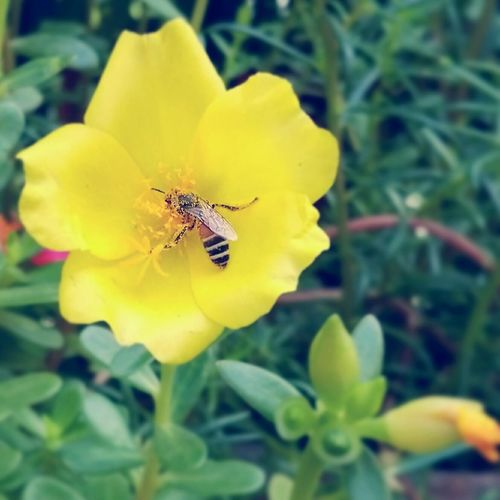 Capturing Freedom Nature HoneyBee Live For The Story