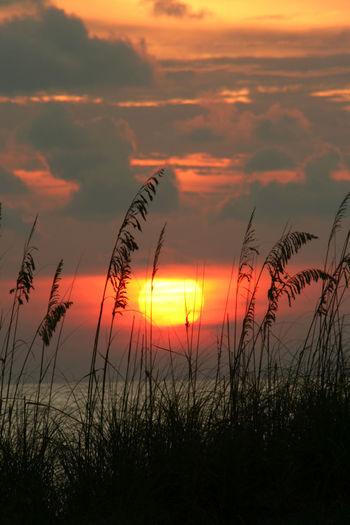 Pass a Grille Florida Sunset Dramatic Sky Florida Gulf Of Mexico Landscape No People Orange Color Pass A Grille Scenics Seaoats Sky Sun Sunset