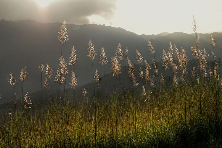 Sunlight Nature Outdoors Grass Growth Day Sky Mountain Kulotitay Clicks Tall Grasses Morning Light Nature Countryside Greenery Perspectives On Nature
