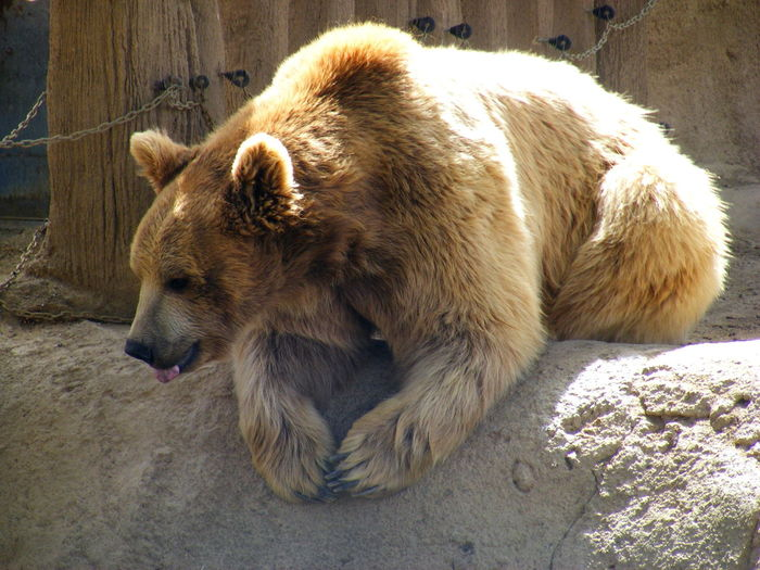 Animal Themes Animal Wildlife Animals In The Wild Bear Day Mammal Nature No People One Animal Outdoors