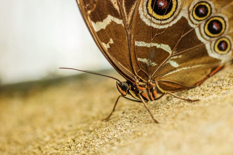 Close-up of moth on sand