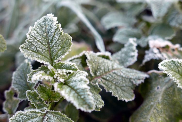 Close-Up Of Frosty Plants Growing Outdoors