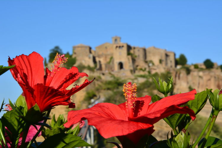 Civita Di Bagnoregio Italy🇮🇹 Flowers Flowers Of Red The City That Dies Focus Object Your Ticket To Europe Postcode Postcards An Eye For Travel Mobility In Mega Cities