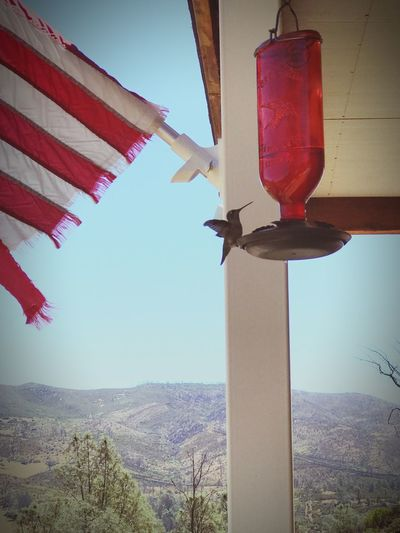 Love the morning visitors No People Hanging Day Sky Flag Low Angle View Outdoors Clear Sky Nature Mountain Beauty In Nature Close-up Hummingbird