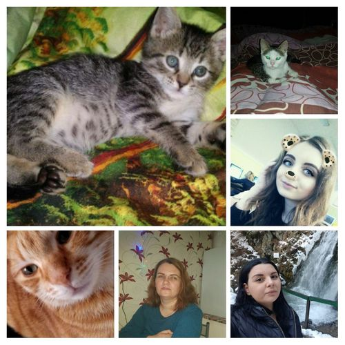 People And Cat I Love,my Nice,my Daughter, My Sister And My Cats💝💝💝💝 Digital Composite Collage Pets Multiple Image Domestic Cat Domestic Animals Animal Themes