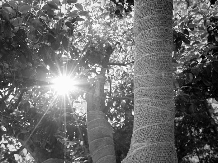 Morning Sunshine Trees Monochrome Daily Life EyeEm Korea
