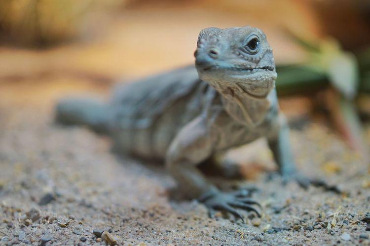 Reptile EyeEm