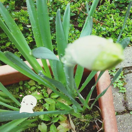 Bourgeons Primavera Primtemps Relaxing Naturelovers Natural Beauty Nature Nature Photography Fleurs Relaxing