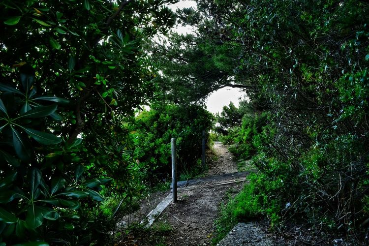 THE PATH.... Nature Wild Tree Green Color