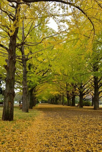 Autumn Autumn Leaves Park EyeEm Nature Lover Naturelovers 昭和記念公園 Autumn🍁🍁🍁 Nature Photography Nikon Japan Sigma30mm F1.4art Autumn Colors Nature
