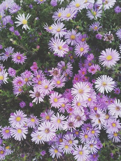 Flowers Violet Flowers Cute♡ Nice