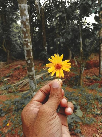 Human Hand Human Hand Flower Head Flower Tree Autumn Yellow Holding Leaf Forest Personal Perspective Wildflower In Bloom Blooming Petal Botany Uncultivated Single Flower HUAWEI Photo Award: After Dark