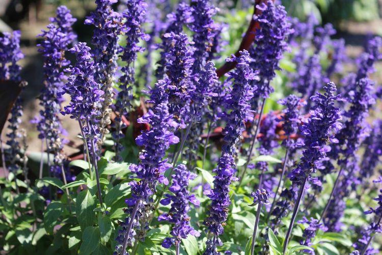 purple flowers,