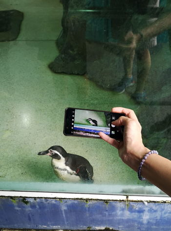 Taking Photo Zoo Caged Animals Captivity Hand Holding Human Hand Old Facility One Animal Penguin Photographing Photography Themes Through The Glass Through The Window Water