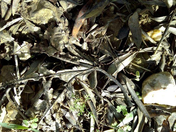 Nofilter Noedit Leaves Leaf Nature Eyeemnaturelover Dry Leaves Autumn Autumn Colors Autumn Leaves