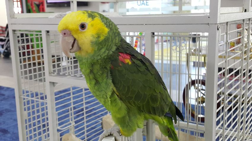 Animal Themes Bird Cage Animals In Captivity Budgerigar Parrot Parakeet Close-up Perching Trapped Indoors  No People Nature Birdcage Day