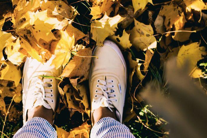 The golden season is gone again Golden Nature Selfeet Yellow Yellow Leaves Autumn Colors Feetselfie