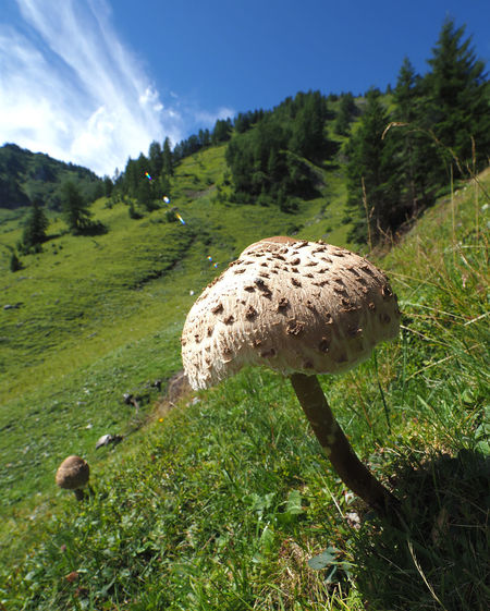 MushRoom with a view No. 2 Alpelti Alpine Flora Gemeiner Riesenschirmling Liechtensteiner Bergwelt Macrolepiota Procera Steg Summer In Liechtenstein View Beauty In Nature Close-up Fungus Giant Mushroom Grass Green Color Growth Landscape Liechtenstein Mountain Mushroom Nature No People Outdoors Parasol Mushrooms Riesenschirmpilz