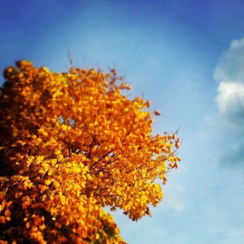 Enjoying summer in fall. Putonyoursandals Lovely Bright and Colourful autumn ilovefall