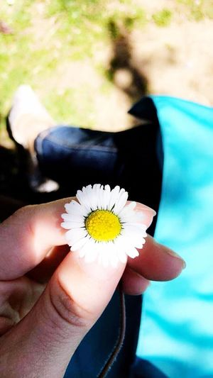 Flower Human Hand Real People Flower Head Holding Human Body Part Freshness Petal Fragility Nature Outdoors Beauty In Nature Day Close-up Focus On Foreground Lifestyles Leisure Activity Yellow Women