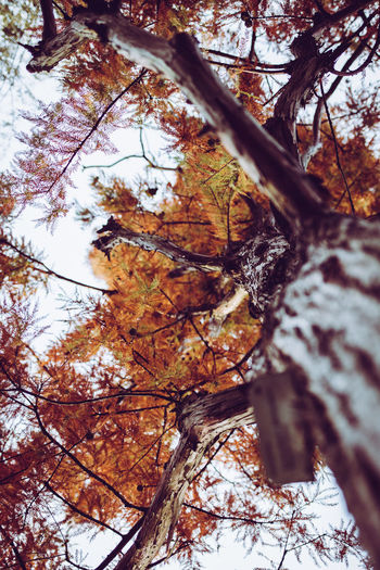 Autumn Colors Autumn Bare Tree Bark Beauty In Nature Branch Change Close-up Cold Temperature Day Forest Fragility Growth Leaf Low Angle View Maple Nature No People Outdoors Scenics Sky Tranquility Tree Tree Trunk Winter Perspectives On Nature EyeEmNewHere