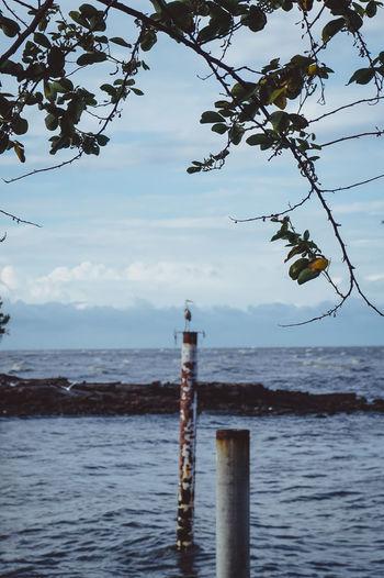 Wooden post in sea against sky