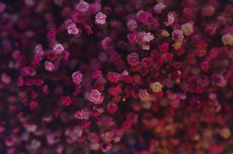 fuafua Flower