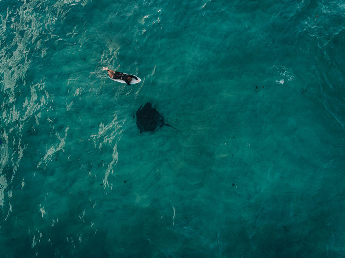 Aerial view of man lying on surfboard in sea